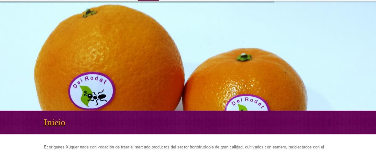 Página web Ecorigenes